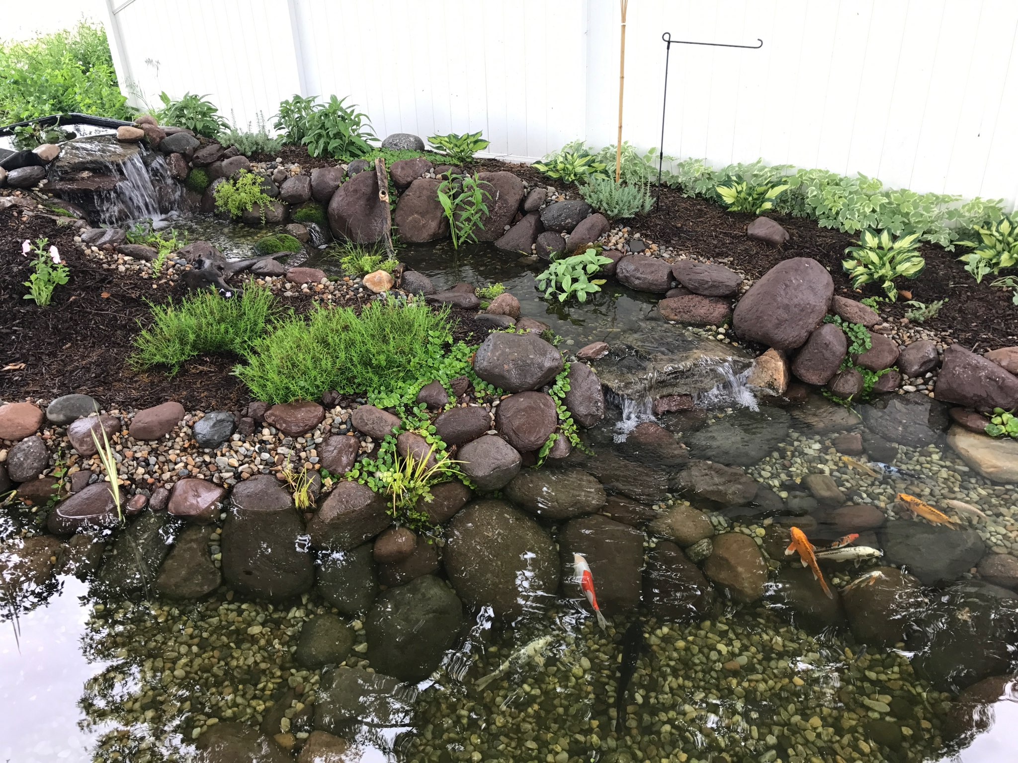 My Pond Thanks to Aqua Scapes of CT