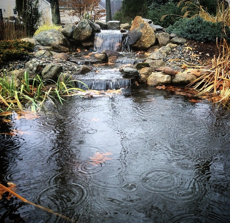 Pond in the Rain