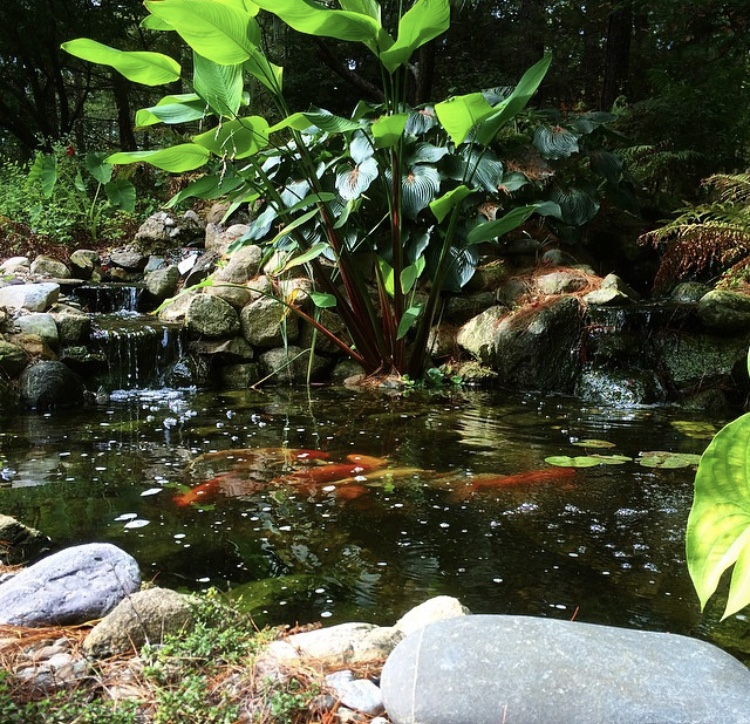Glastonbury Koi Pond